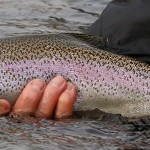 Late Fall Fishing on the Yakima River